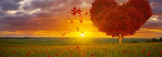 psychic Cecelia Love and Relationships soulmates readings